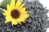 Семена подсолнечника Сирена