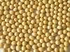 Семена Сои Monsanto Grimo