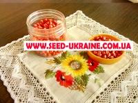 Насіння кукурудзи АРГЕНТУМ ФАО 250