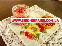 Гибрид кукурузы Почаевский 190 (ФАО 190)